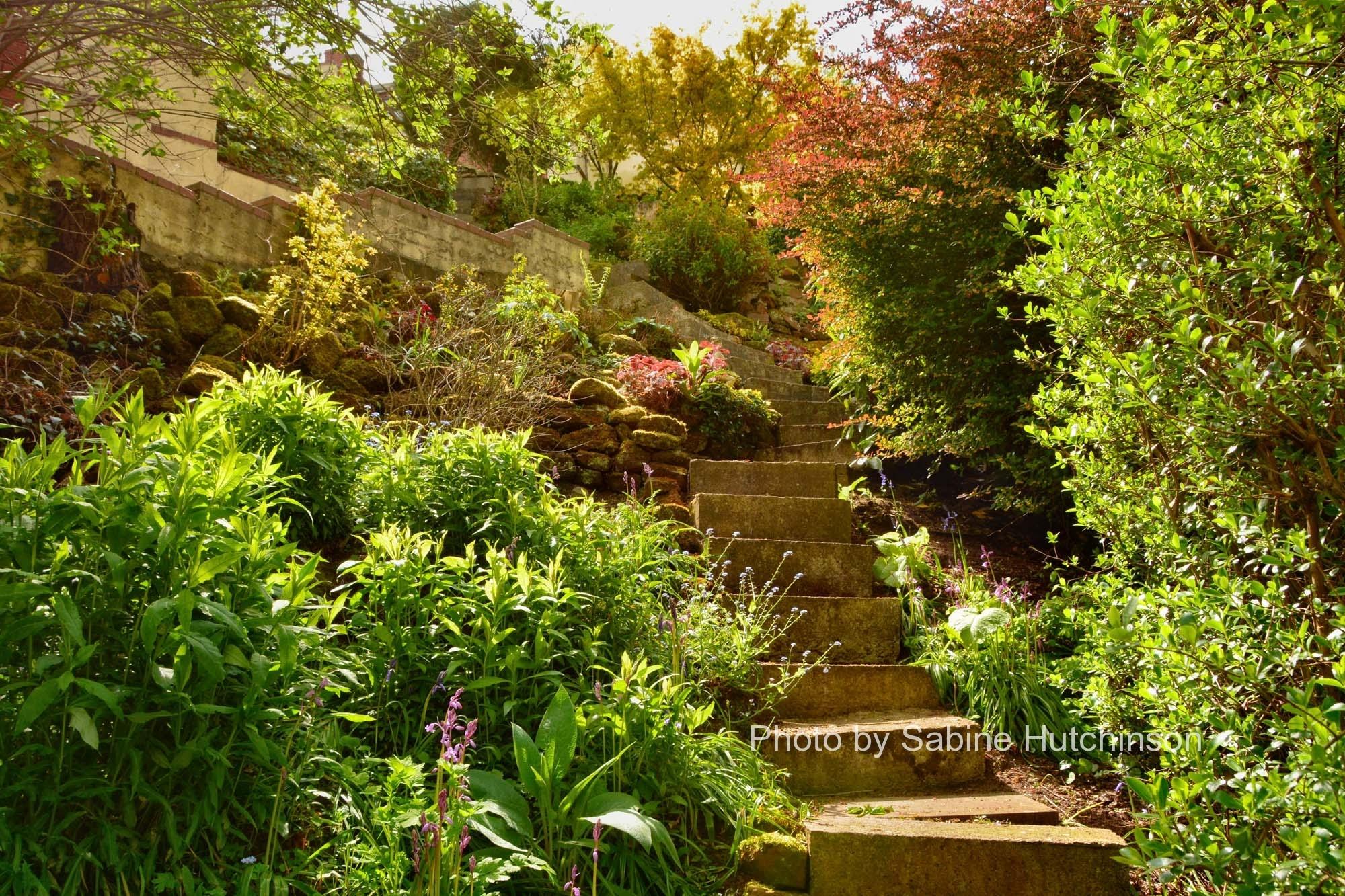 brownhill house garden - april 2017 - shropshire photographs
