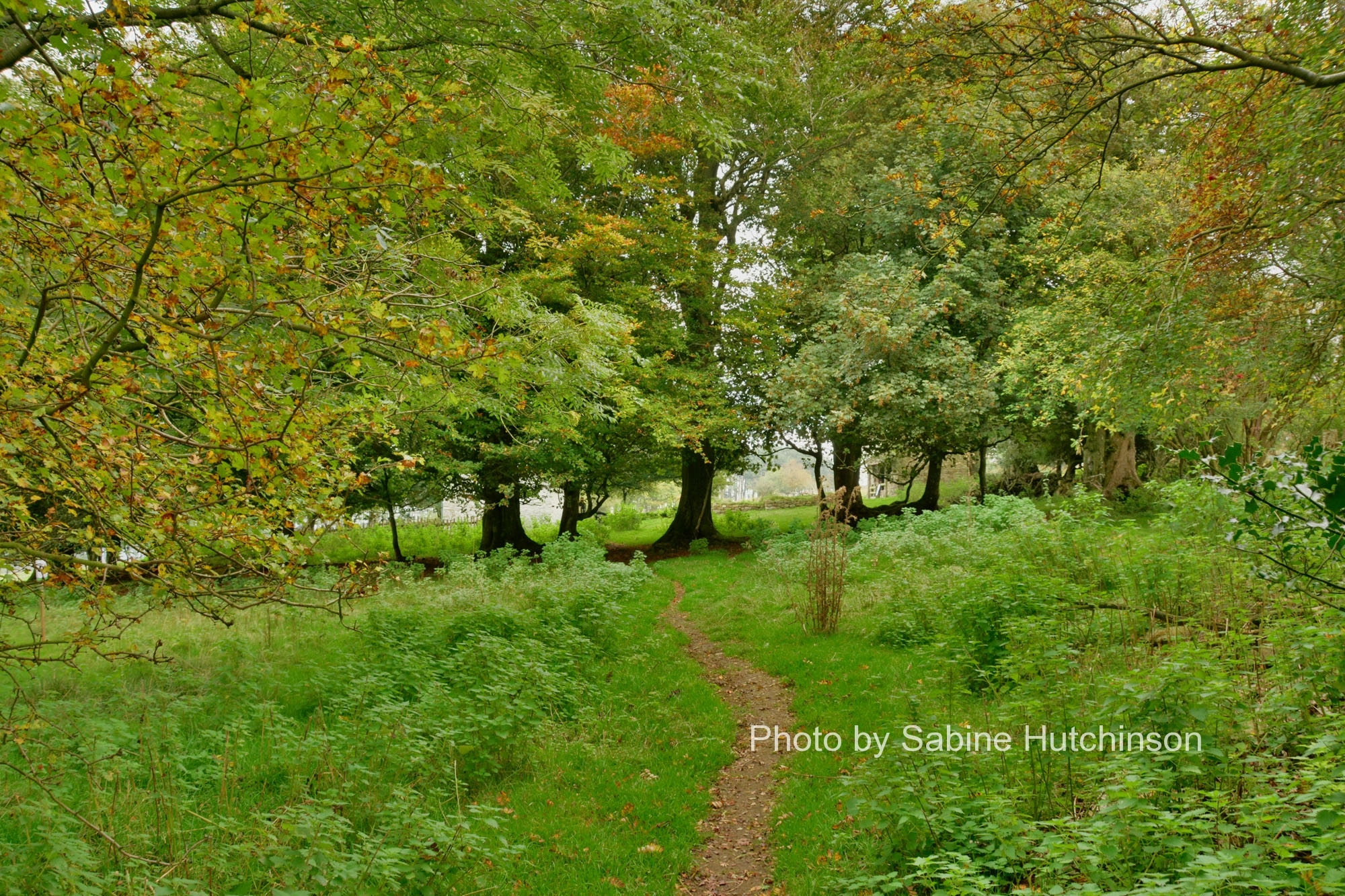 Blakemoregate Cottages 11 October 2015 - Shropshire ...